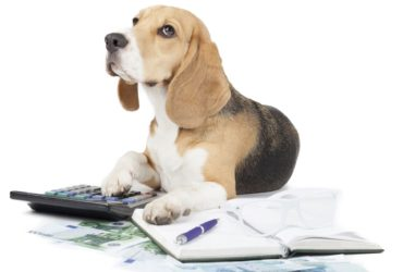 AKC Pet Insurance - A Name You Can Trust