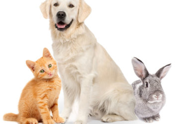 Finding the Best Pet Insurance Company - Two Categories to Consider