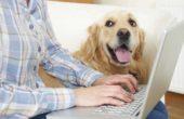 Pet Health Insurance Options
