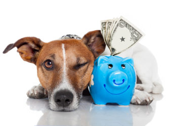 Questions to Ask When Buying Pet Insurance