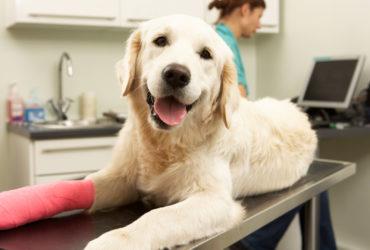 Vet Pet Insurance - Does it Make Good Economic Sense?